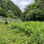 草刈り大作戦ダム