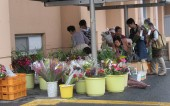 お花がいっぱい